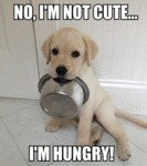 I'm Not Cute... I'm Hungry!