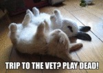Trip To The Vet? Play Dead!