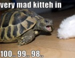 Very Mad Kitteh In...