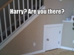 Harry? Are You There?