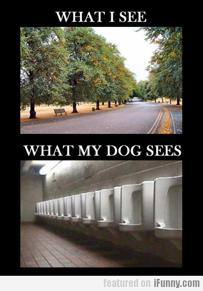 What I See Vs. What My Dog Sees