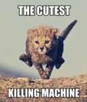 The Cutest Killing Machine