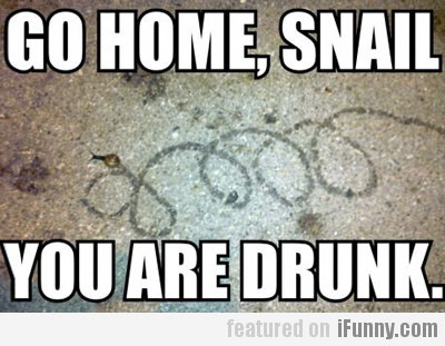 Go home, snail, you are drunk