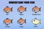 Understand Your Fish