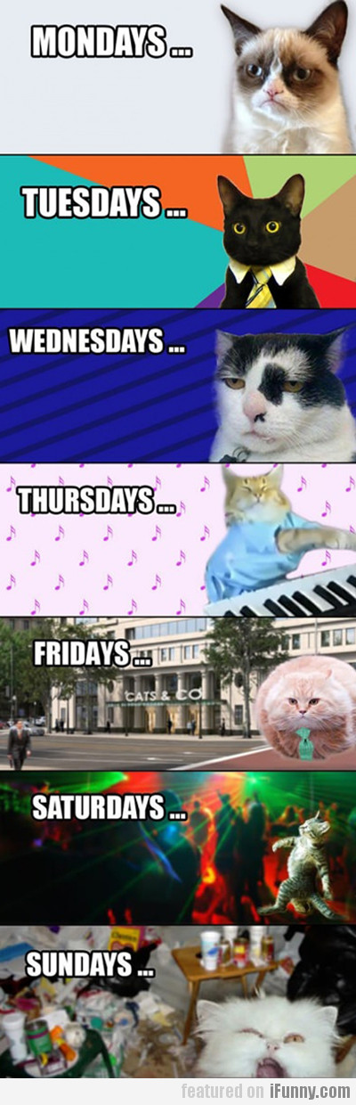 LOlcat days of the week