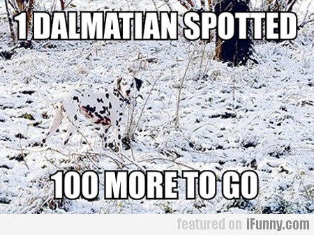 1 Dalmatian Spotted, 100 More To Go