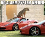 No Alarm System Needed