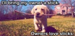 I'll Bring My Owner A Stick…