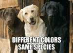 Different Colors, Same Species