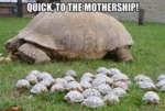 Quick, To The Mothership!