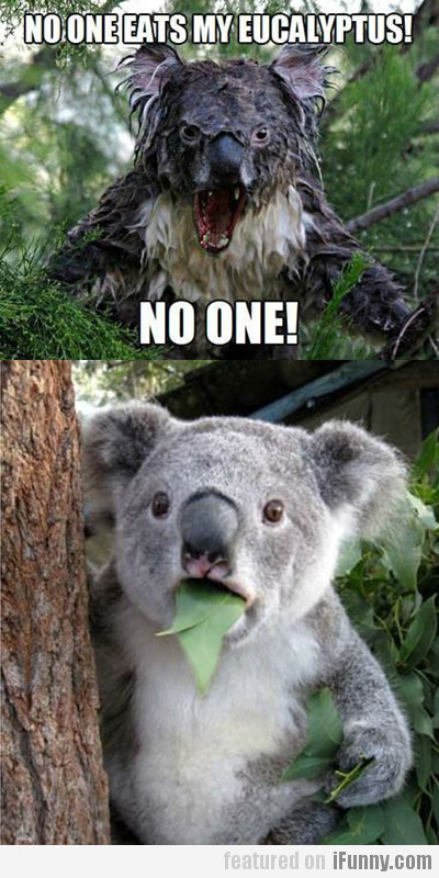 No One Eats My Eucalyptus!