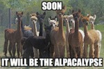 Soon, It Will Be The Alpacalypse