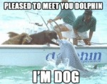 Please To Meet You Dolphin