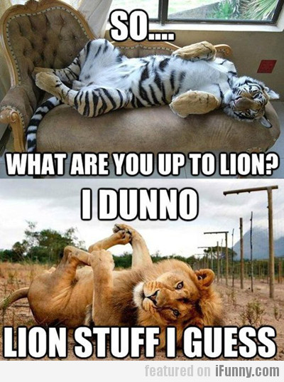 What Are You Up To Lion?