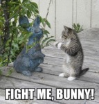 Fight Me, Bunny!