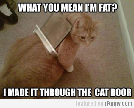 What You Mean I'm Fat?