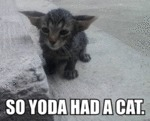 So Yoda Had A Cat