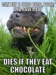Can Eat A Dead Bird, Poop And Raw Meat...