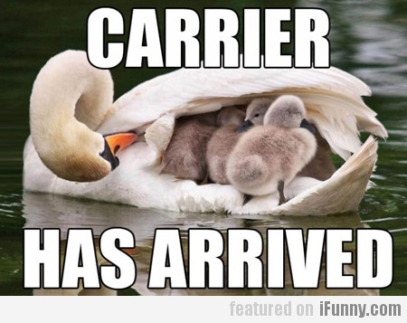 Carrier Has Arrived
