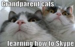 Grandparent Cats Learning How To Skype