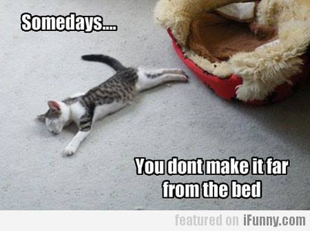 Somedays... you don't make it far from the bed