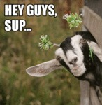 Hey Guys, Sup...