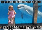 Let's Go See The Cute Dolphins They Said...
