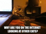 Why Are You On The Internet Look At Other Cats?