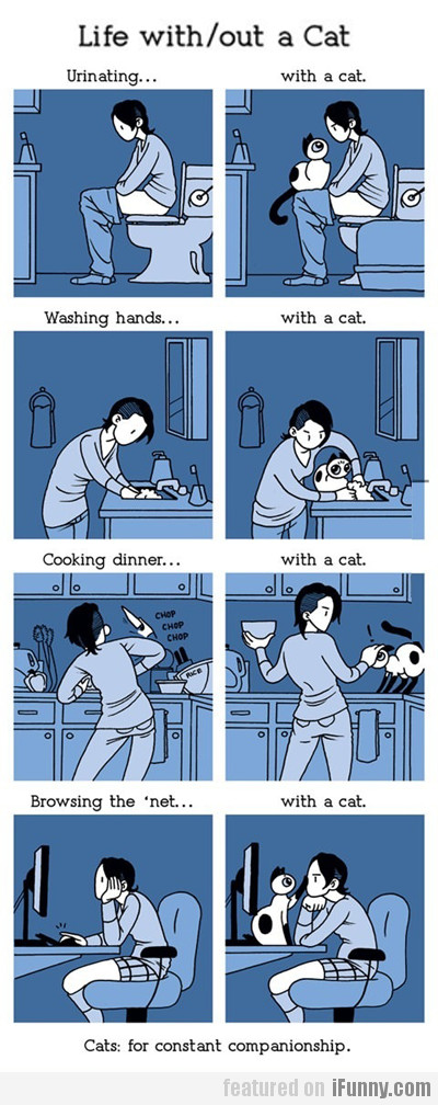 Life with & without a cat