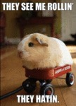 They See Me Rollin', They Hatin