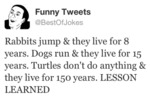Rabbits Jump & They Live For 8 Years...