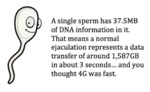 A Single Sperm Has 37.5mb Of Dna Information In It