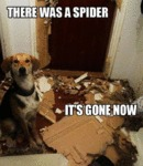 There Was A Spider, It's Gone Now...