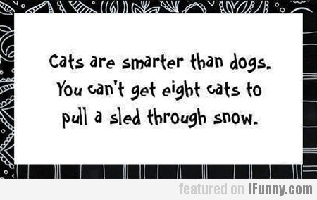 Cats Are Smarter Than Dogs...