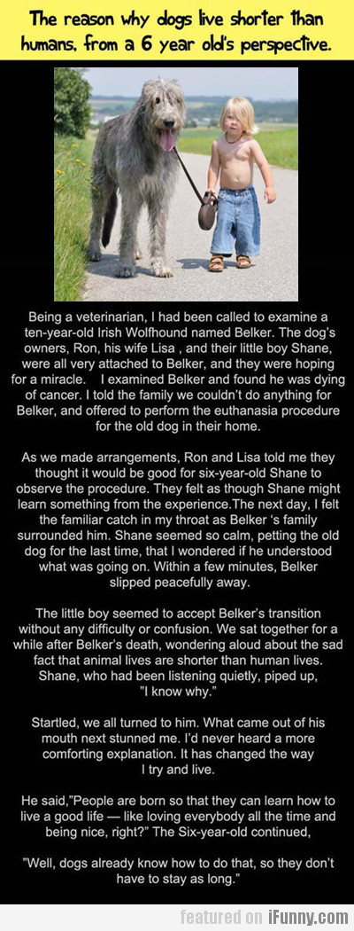 the reason why dogs live shorter than humans...