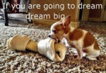If You Are Going To Dream, Dream Big