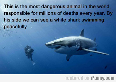 This Is The Most Dangerous Animal In The World...