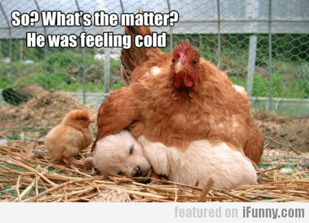 So? What's The Matter? He Was Feeling Cold