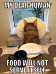 My Dear Human, Food Will Not Serve Itself