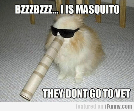 Bzzzbzzz... I Is Masquito, They Dont Go To Vet