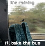 It's Raining, I'll Take The Bus