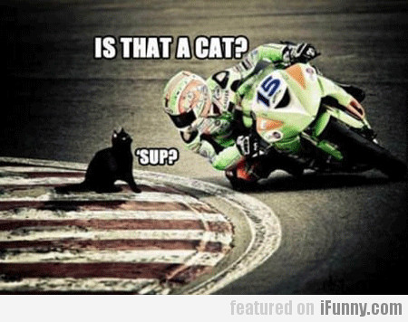 is that a cat? sup?