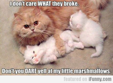 i don't care what they broke, don't you dare...