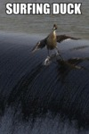 Surfing Duck