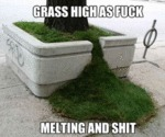 Grass High As Fuck, Melting And Shit