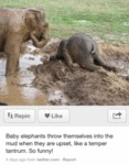 Baby Elephants Throw Themselves Into The Mud
