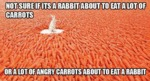 Not Sure If It's A Rabbit About To Eat A Lot Of...