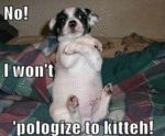 No, I Won't 'pologize To Kitteh!