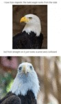 I Love How Majestic The Bald Eagle Looks...