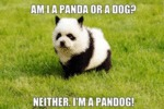 Am I A Panda Or A Dog?